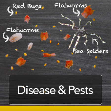 Diseases and Pests