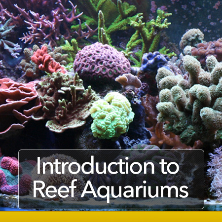 Introduction to Reef Aquariums