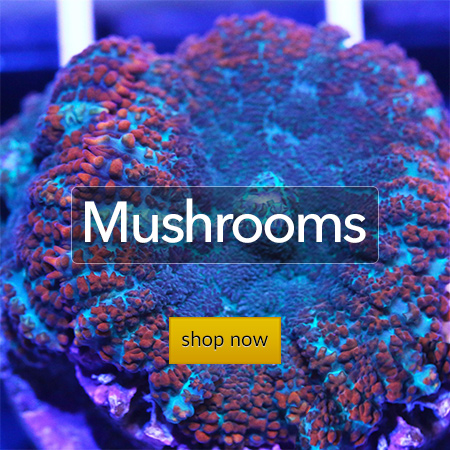 """Mushrooms"